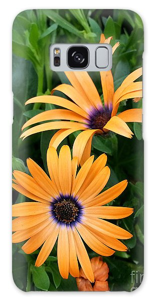 Yellow Cape Daisy Galaxy Case