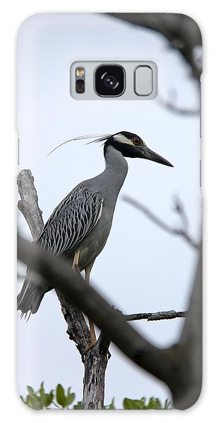 Yellow Crowned Night Heron Galaxy Case by Marta Alfred