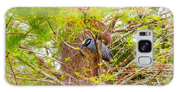Boynton Galaxy S8 Case - Yellow-crowned Night Heron Nyctanassa by Panoramic Images
