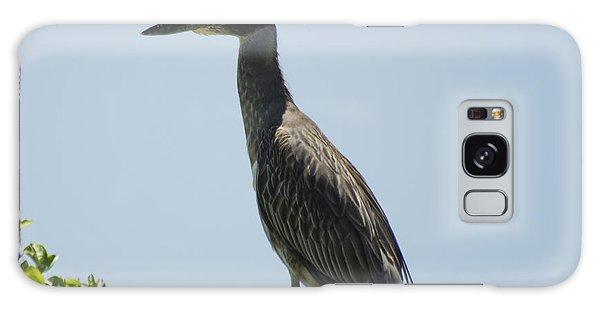 Yellow-crowned Night-heron Galaxy Case