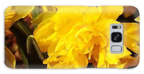 Yellow Daffodils Galaxy Case