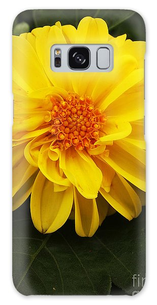 Yellow Dahlias Galaxy Case