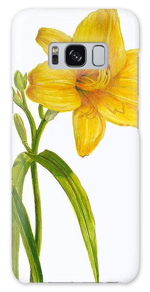 Yellow Daylily - Hemerocallis Galaxy Case