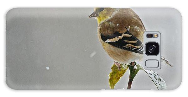 Goldfinch Galaxy Case