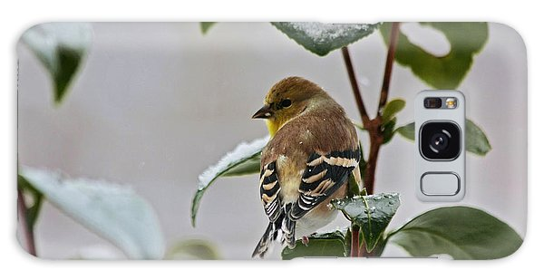 Yellow Finch On Branch Galaxy Case by Denise Romano