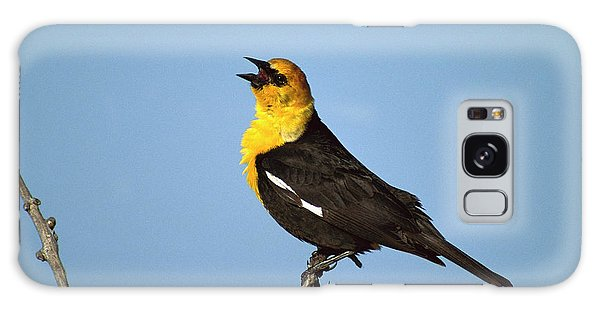 Yellow-headed Blackbird Singing Galaxy Case by Tom Vezo