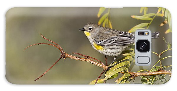 Yellow Rumped Warbler Galaxy Case