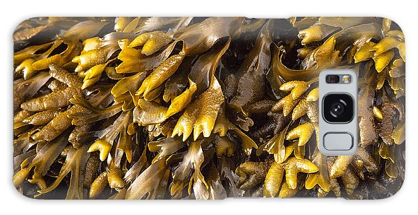 Yellow Sea Plant Galaxy Case