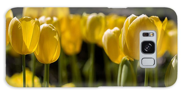 Yellow Tulips On Parade Galaxy Case