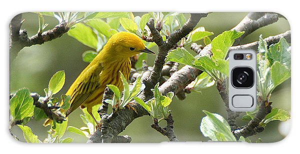 Yellow Warbler In Pear Tree Galaxy Case