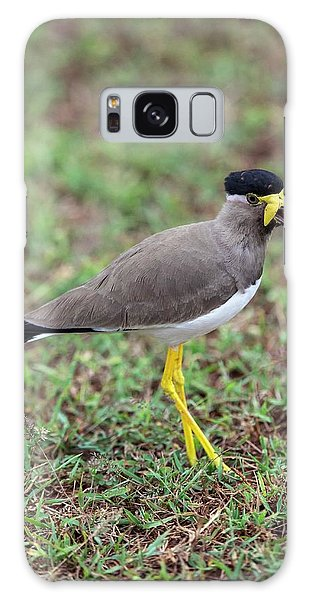 Lapwing Galaxy Case - Yellow-wattled Lapwing by Peter J. Raymond