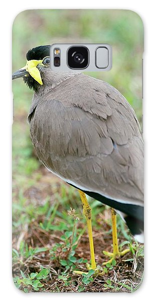 Lapwing Galaxy Case - Yellow Wattled Lapwing by Tony Camacho