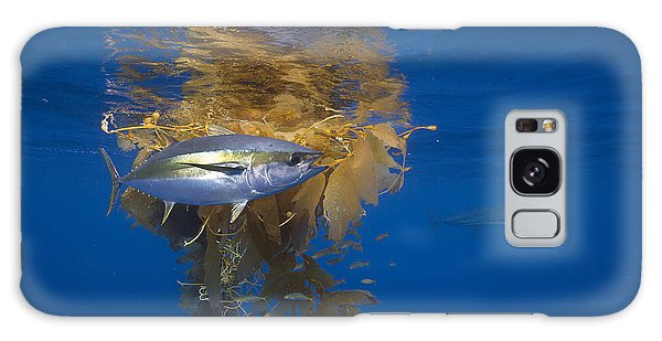 Galaxy Case featuring the photograph Yellowfin Tuna And Kelp Nine-mile Bank by Richard Herrmann