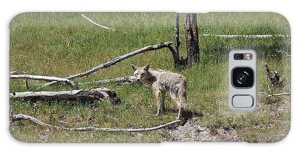 Yellowstone Coyote Galaxy Case