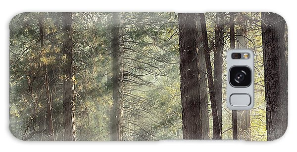 Pine Branch Galaxy Case - Yosemite Pines In Sunlight by Jane Rix