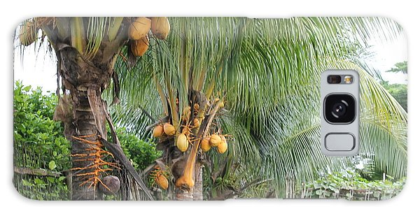 Young Coconut Trees Galaxy Case by Cyril Maza