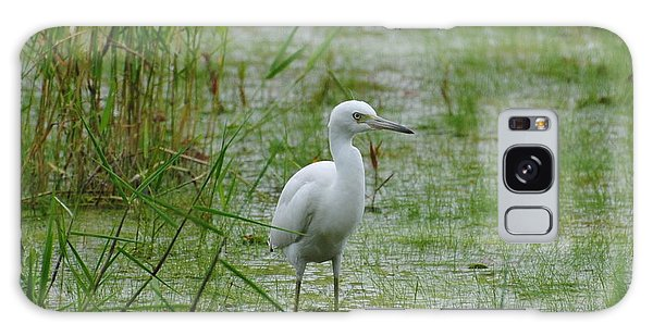 Juvenile Little Blue Heron At Willow Pond Galaxy Case by Dan Williams