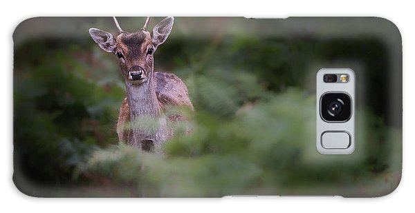 Young Galaxy Case - Young Fallow Deer by Karen Deakin
