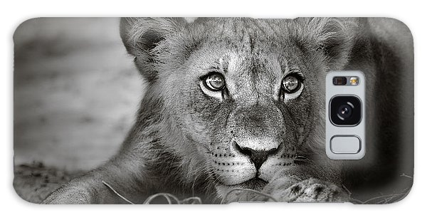 Lion Galaxy Case - Young Lion Portrait by Johan Swanepoel