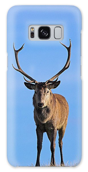 Cairngorms National Park Galaxy Case - Young Red Deer Stag by Duncan Shaw/science Photo Library