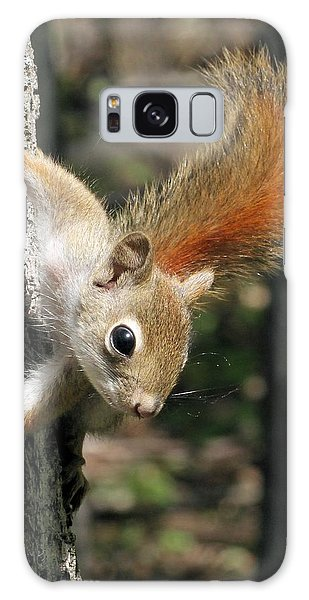 Young Red Squirrel Galaxy Case