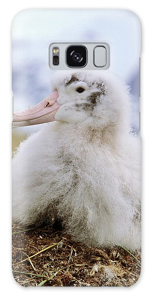 Albatross Galaxy Case - Young Wandering Albatross (diomendea by Martin Zwick
