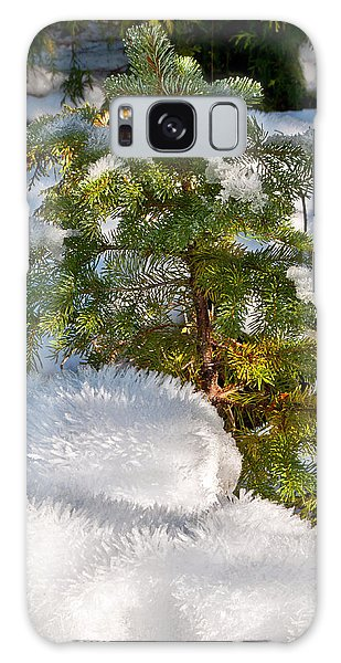 Young Winter Pine Galaxy Case