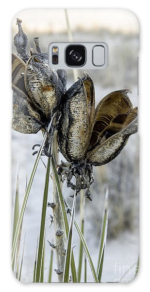 Yucca Seed Pods Galaxy Case