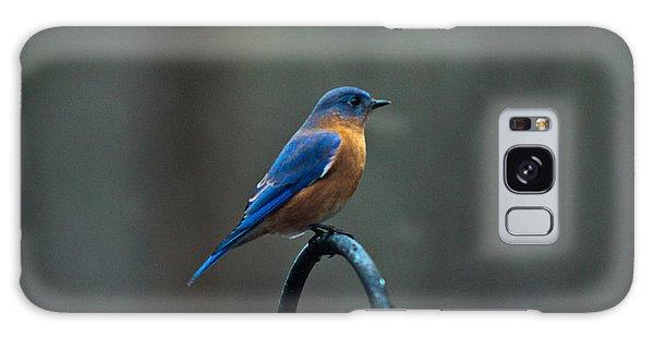 Crossville Galaxy S8 Case -  Eastern Bluebird On Perch 2 by Douglas Barnett