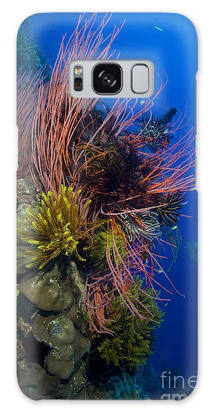 Feather Stars Galaxy Case - A Colony Of Red Whip Fan Corals by Steve Jones