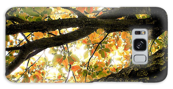 Beneath The Autumn Wolf River Apple Tree Galaxy Case