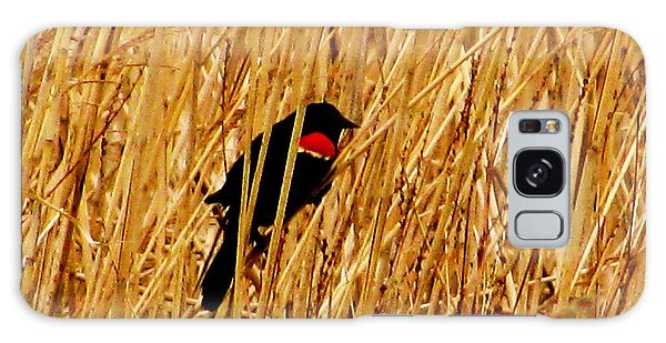 Blackbird In The Reeds Galaxy Case