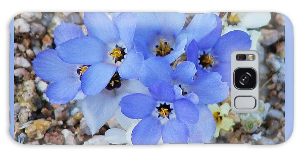 Rare Blue Parry Gilia Galaxy Case