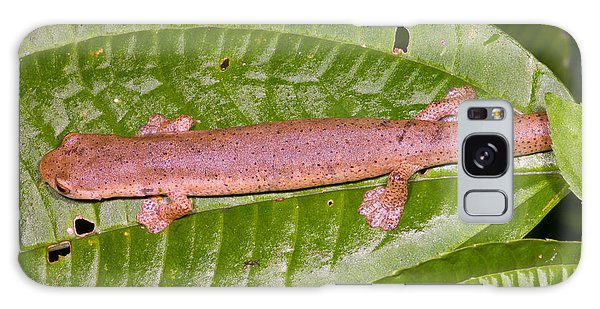 Bolitoglossine Salamander Galaxy S8 Case