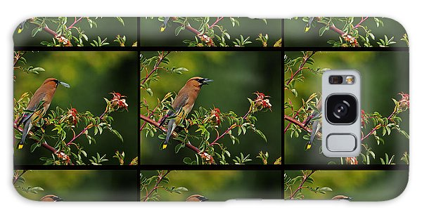Cedar Wax Wing Having Lunch Galaxy Case
