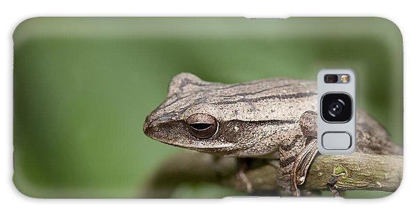 Malaysia Frog Galaxy Case