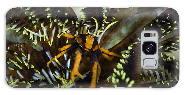 Feather Stars Galaxy Case - Orange And Brown Elegant Squat Lobster by Steve Jones