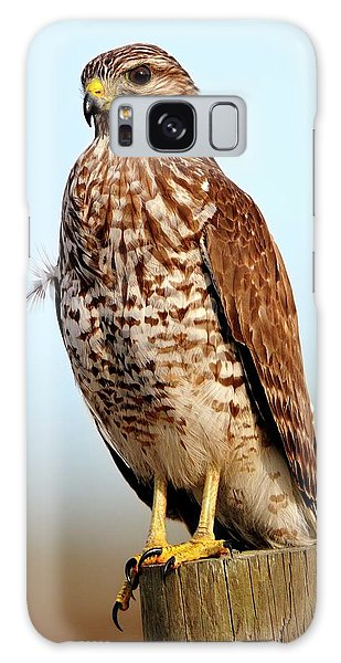 Portrait Of A Red Shouldered Hawk Galaxy Case