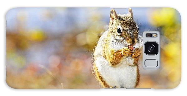 Fall Galaxy Case - Red Squirrel by Elena Elisseeva