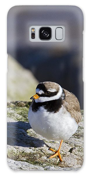 Ringed Plover Galaxy Case