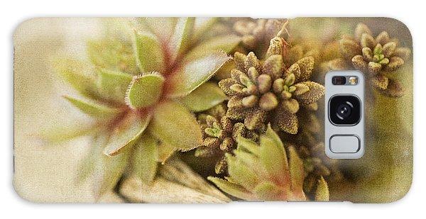 Desert Flora Galaxy Case - Succulents by Bonnie Bruno