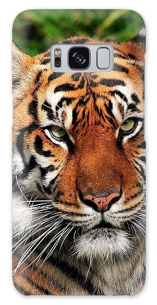 Sumatran Tiger Portrait Galaxy Case