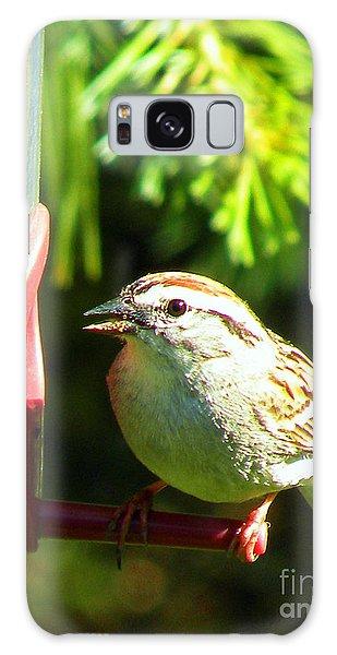 The Sparrow Galaxy Case