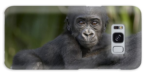 Western Lowland Gorilla Gorilla Gorilla Galaxy Case by San Diego Zoo