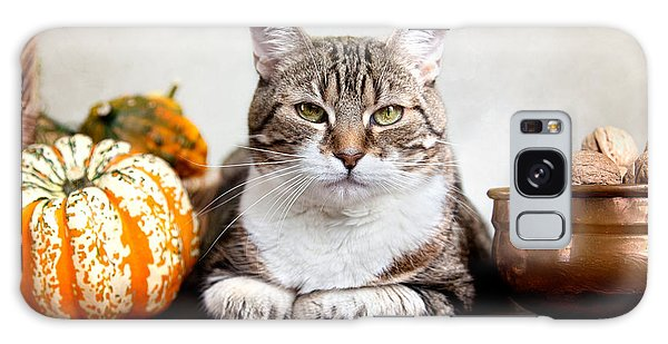 Pumpkin Galaxy S8 Case - Cat And Pumpkins by Nailia Schwarz