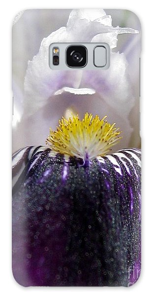 Miniature Tall Bearded Iris Named Consummation Galaxy Case by J McCombie