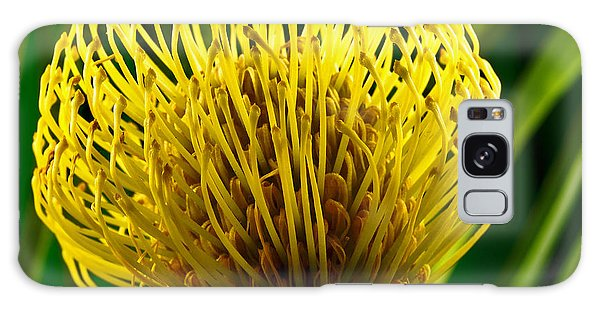 Picture Of A Pincushion Protea Galaxy Case