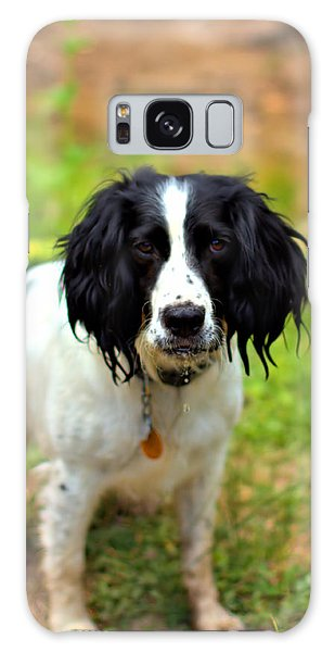 Spaniel Galaxy Case by Marlo Horne