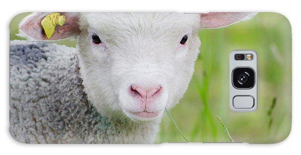 Young Sheep Galaxy Case
