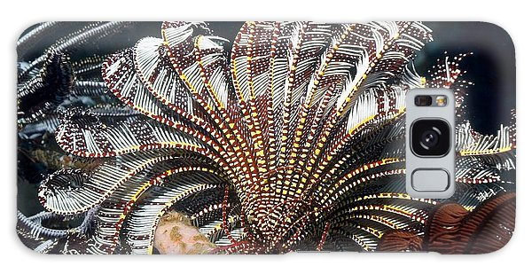 Feather Stars Galaxy Case - Crinoid by Georgette Douwma